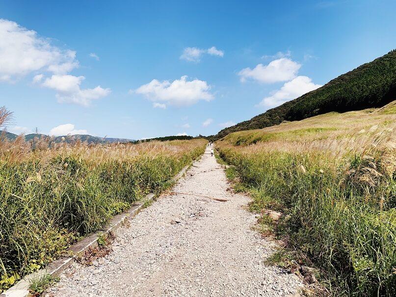 仙石原すすき草原の草原全体像