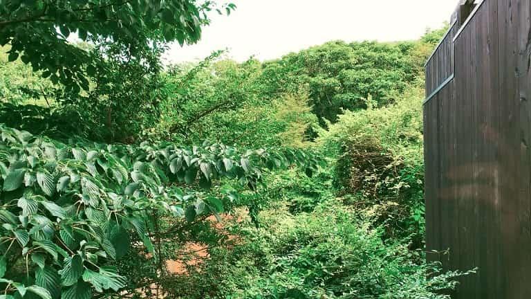 ベッドルームから望む緑の景色